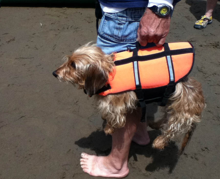 Dog being carried by a PFD