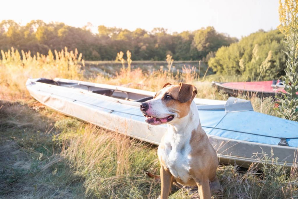 A dog on land with a kayak