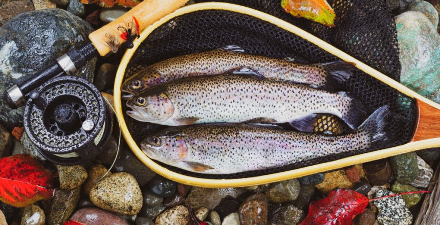 Fly reel for trout fishing
